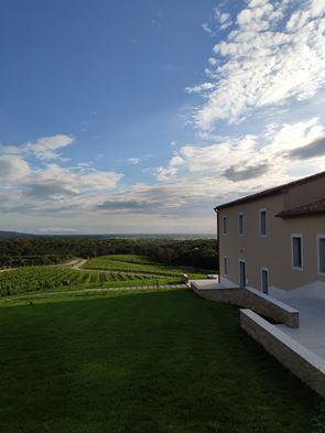 Masseto winery opened 1