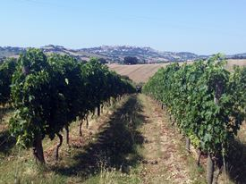 Marche Wine Tour 3