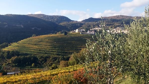 Gourmet day in Valpolicella 5