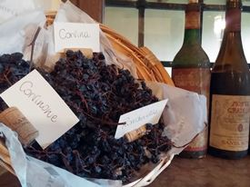 Gourmet day in Valpolicella 11