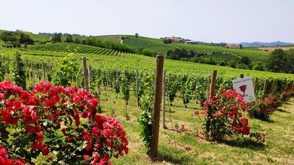 Monferrato traditional and new 6